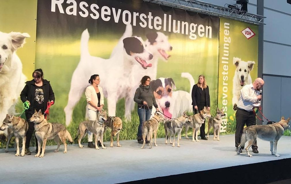 Morrow, 3rd in from the left at the WDS breed presentation