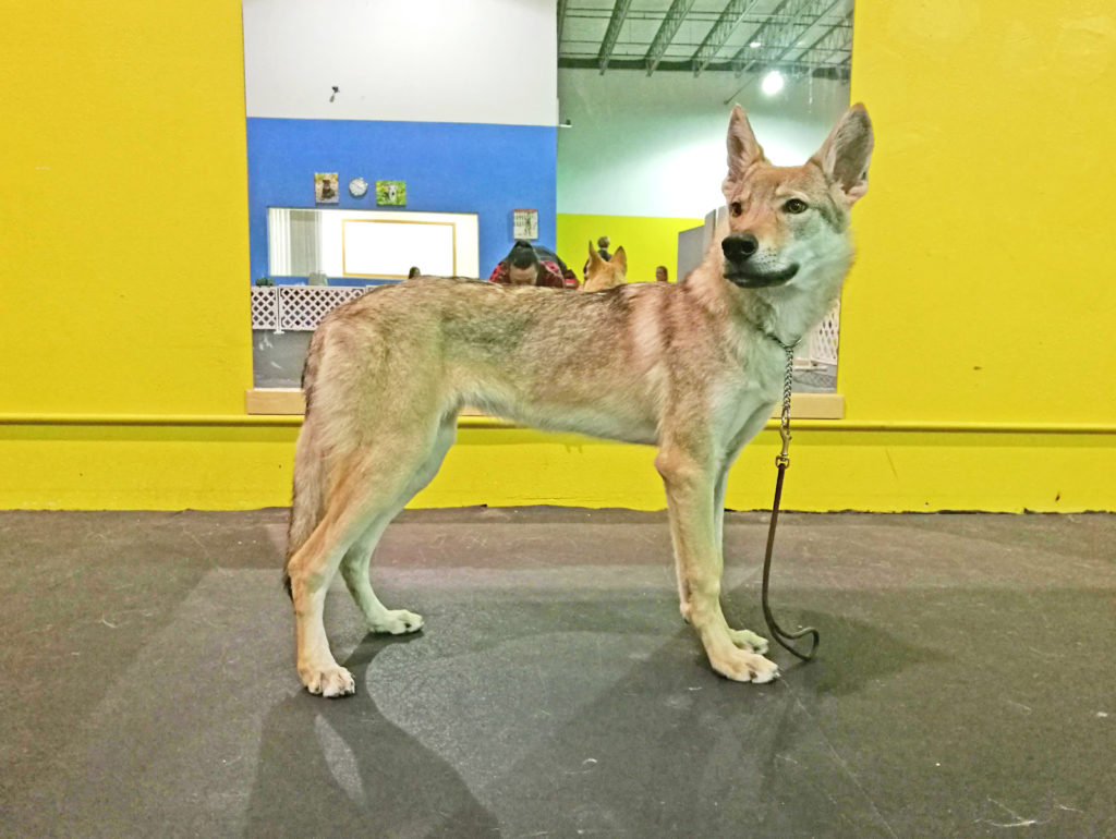 At handling class, 6 months old.